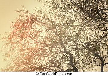 ramas de árbol