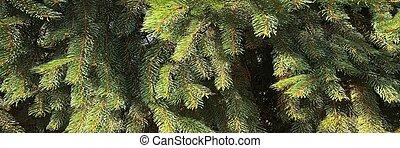 ramas de árbol, navidad, fondo.