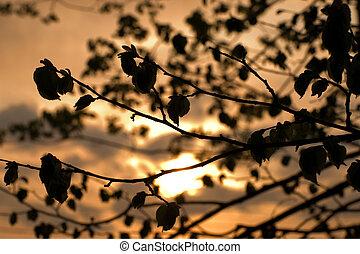 ramas, de, un, árbol, en, ocaso