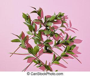 ramas, hojas, en, un, rosa, fondo.