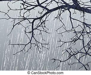 ramas, invierno