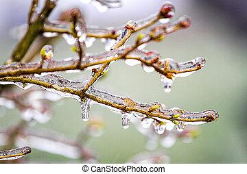 ramas, pegajoso, hielo