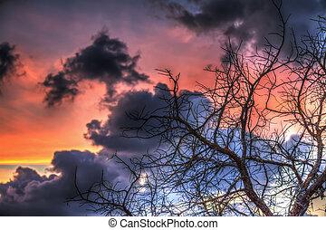 ramas, silueta, debajo, un, colorido, cielo, en, ocaso