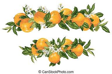 ramas, titular, fruta cítrica, vector, toronja, elementwith, decoración