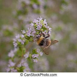 ramassage, abeille
