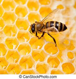 ramassage, coup, macro, abeille, miel, rayon miel