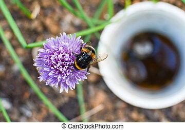 ramassage, pollen, naturel, jardin, habitat, bumble abeille,...