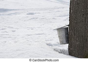 ramassage, seau, arbre, attaché, sève, érable
