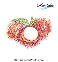 Fresh fruit rambutan isolated on white background