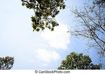 rami albero, cielo