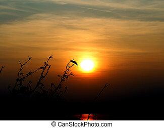 rami albero, e, asciutto, foglie, davanti, il, sole, durante, uno, tramonto, in, autunno