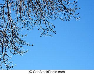 rami albero, isolato, su, cielo blu