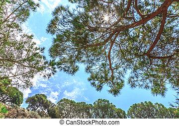 rami albero, su, cielo blu