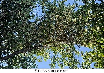 rami albero, su, cielo blu, fondo