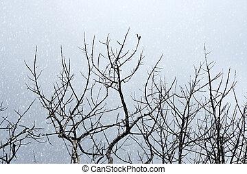 rami albero, su, il, cielo, con, neve, fondo.