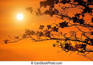 rami albero, su, sfondo arancia