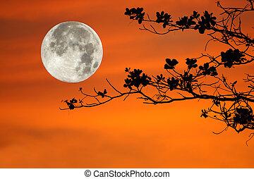 rami albero, su, sfondo arancia, e, grande, moon.