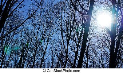 rami albero, superficie, sky.