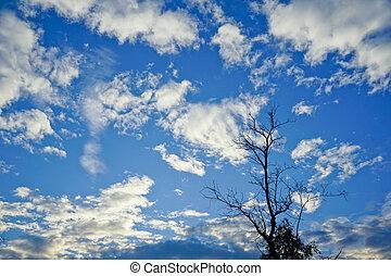 rami, asciutto, albero, su, cielo blu, fondo.