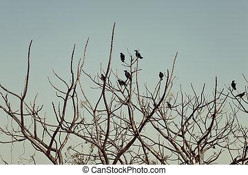 rami, corvi, albero, seduta, gruppo, nudo
