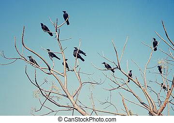 rami, corvi, seduta, gruppo, nudo