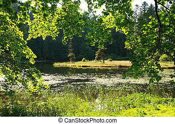 rami, lago isola, mezzo, foresta verde, attraverso, vista