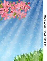 rami, rosa, erba, fioritura, ciliegia, verde, bokeh, effetto