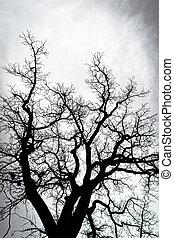 rami, silhouette, albero