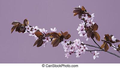 ramita, de, flores del resorte, en, un, fondo rosa
