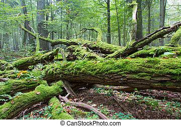 ramo, árvore, carvalho, quebrada, musgo, embrulhado