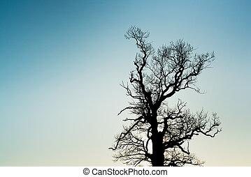 ramo albero, silhouette, con, il, cielo tramonto, in, il, fondo