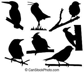 ramo, albero, uccelli, silhouette, piccolo