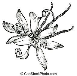 ramo, bosquejo, flor