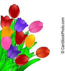 ramo, colorido, tulipanes, flores, aislado, blanco, plano de fondo