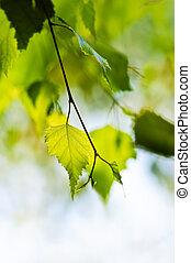 ramo, com, verde sai