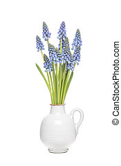 ramo, de, azul, uva, hyacints, en, un, blanco, florero,...