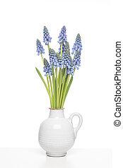 ramo, de, azul, uva, hyacints, en, un, blanco, florero, en,...
