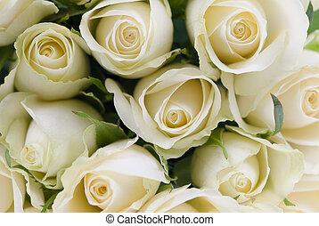 ramo, de, blanco, rosas