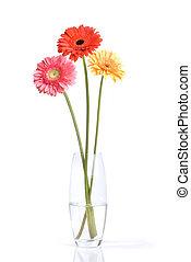 ramo, de, daisy-gerbera, en, florero de vidrio, aislado, blanco