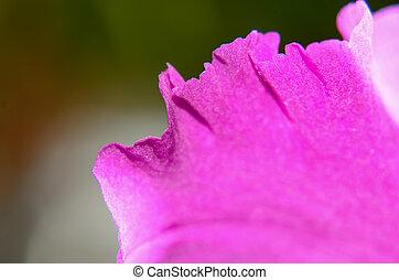 ramo, de, orquídea