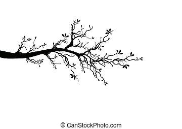 ramo, de, primavera, árvore
