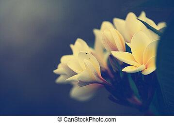 ramo, di, fiori tropicali, frangipani, (vintage, tono,...
