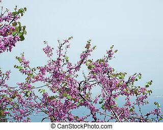 ramo, di, uno, fioritura, albero