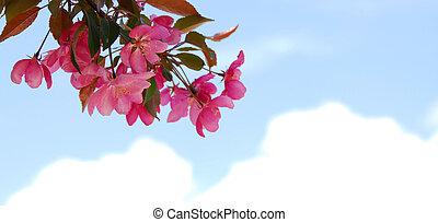 ramo, florescer