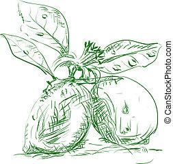 ramo, limoni