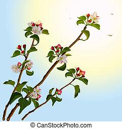 ramo, macieira, com, flores
