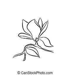 ramo, magnólia, ilustração, vetorial, fundo, florescendo,...