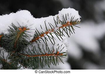ramo, nevoso