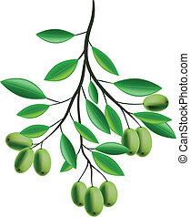 ramo olivastro, illustrazione