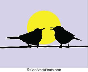 ramo, sentando, sol, dois pássaros, vetorial, fundo, desenho